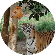 tigre terra natura halloween