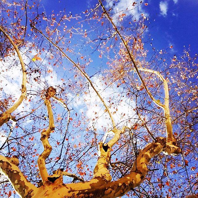 Nada como el azul del cielo de Valencia ? #valencia #cielodevalencia #blue #lovevalencia