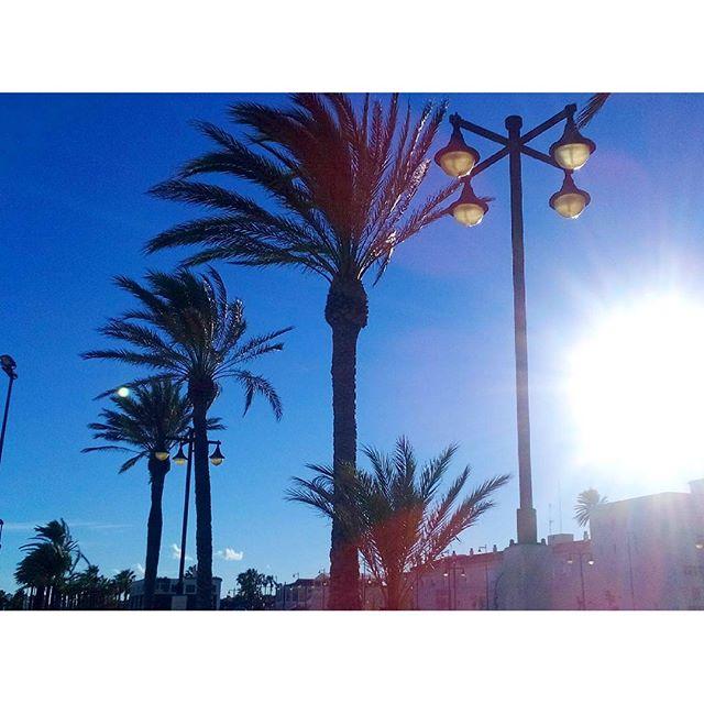 Enjoying the last days of sunshine. 20 degrees, January! Te quiero!!!! #lovevalencia #valencia #travel #travelgram #sunshine #palmtrees #beach #sand #sea #sunbathing