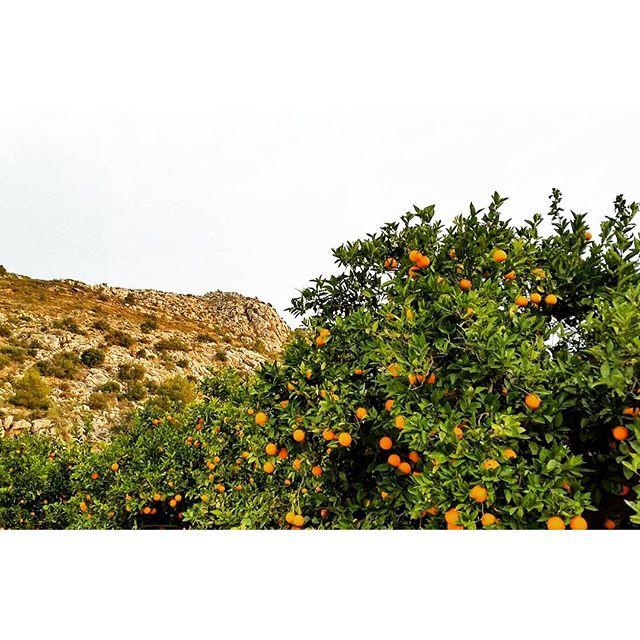 Entre naranjos. #denia #estaes_natura #estaes_valencia #naranjos #country #landscape #unpaseounafoto #estaes_alicante #lovevalencia #instagram #instantes_fotograficos #instagramers #factorypassions #instagood #estaes_montes #loves_valencia #spain #total_cvalenciana #instagramers #ig_spain #somosinstagramers #spain_gallery #be_one_spain #orange #movilgrafias #TurismoSpain #descubriendoigers #igersvalencia #igersalicante