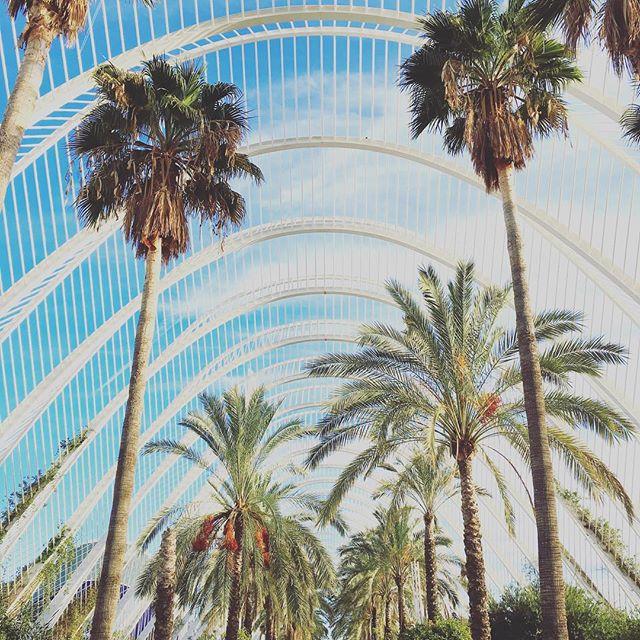 Palm trees and Valencia dreams ???
