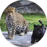 bioparc parque de animales