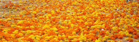 La Batalla de flores de Valencia