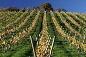 vini e liquori tipici nella zona di Valencia