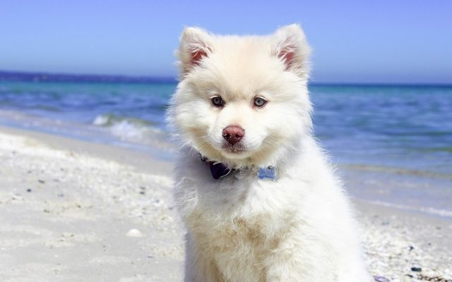 spiagge a valencia cani