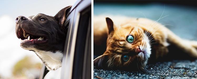 viaje con mascotas