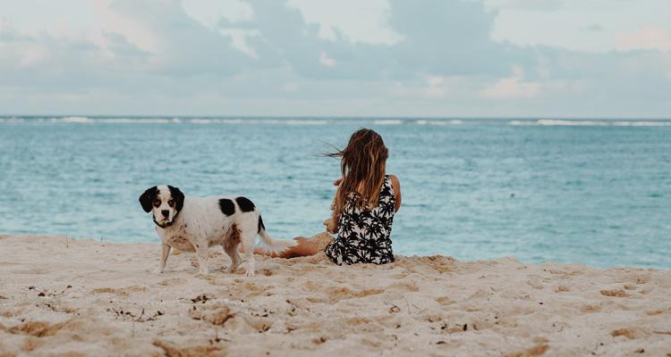 playas para ir con perros valencia