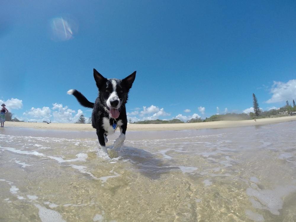 playa para perros valencia